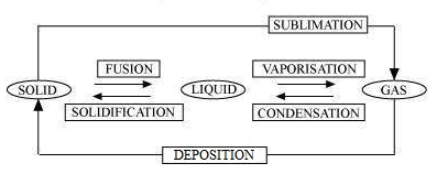 diagram class 9 science chapter 1 answer