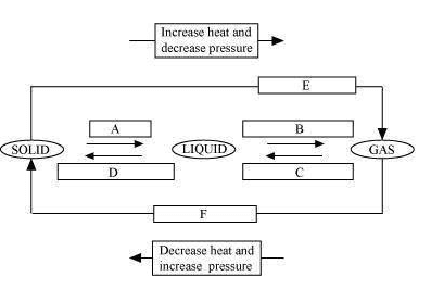 diagram class 9 science chapter 1 question