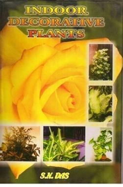 Indoor Decorative Plants