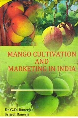 Mango Cultivation And Marketing in India