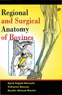 Regional And Surgical Anatomy Of Bovines