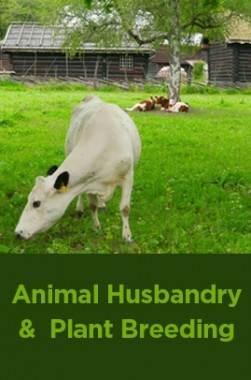 Animal Husbandry And Plant Breeding