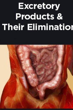 Excretory Products And Their Elimination