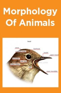 Morphology Of Animals