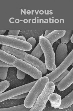Organism And Population
