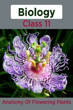 Biology-Anatomy Of Flowering Plants Class11