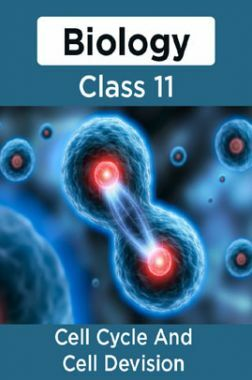 Biology-Cell Cycle And Cell Devision Class11