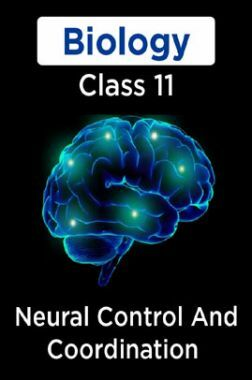 Biology-Neural Control And Coordination Class11