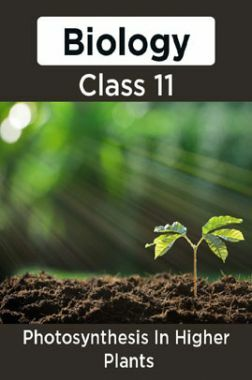 Biology-Photosymthesis In Higher Plants Class11