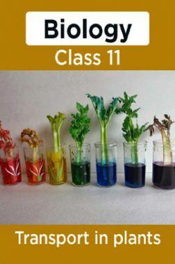 Biology-Transport In Plants Class11