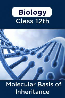 Biology - Molecular Basis Of Inheritance Class 12th