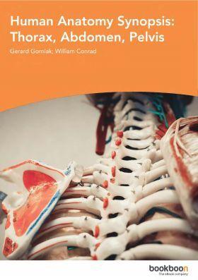 Human Anatomy Synopsis Thorax Abdomen Pelvis