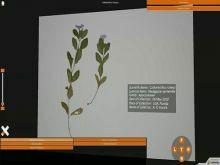 Herbarium Sheets Experiments