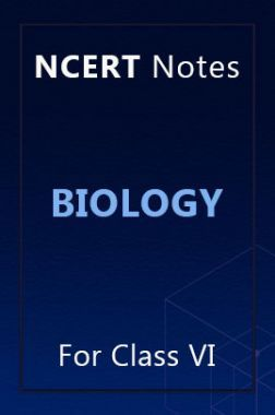 NCERT Notes Biology For Class VI