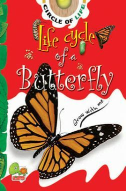 Circle of Life: Life Cycle of a Butterfly