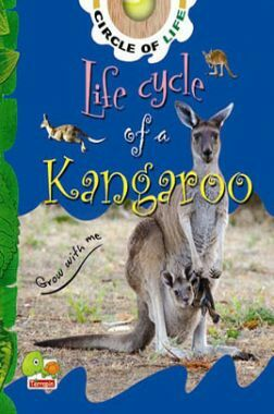 Circle of Life : Life Cycle of a Kangaroo