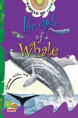 Circle of Life : Life Cycle of a Whale