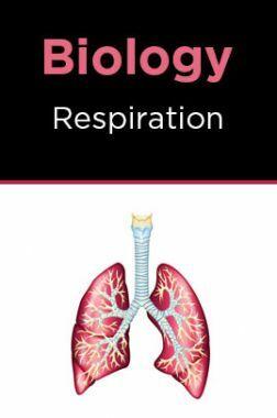 Biology-Respiration