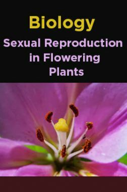Biology-Sexual Reproduction in Flowering Plants