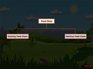 Grade X Types Of Food Chains