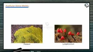 Biological Classification - Acellular Slime Molds (Session 6)