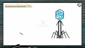 Biological Classification - Structures Of Bacteriophage And Influenza Virus (Session 4)