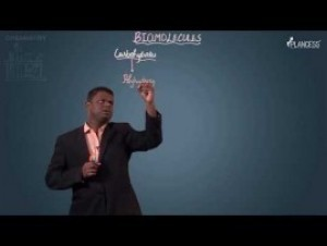 Biomolecules & Polymers - Carbohydrates Video By Plancess