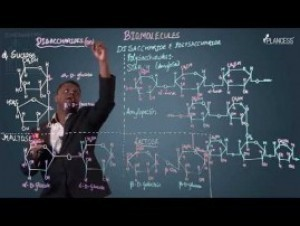 Biomolecules & Polymers - Disaccharides And Polysaccharide Video By Plancess