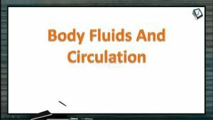 Body Fluids And Circulation - Haemopoiesis And Stem Cells (Session 3)