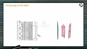 Cell The Unit of Life - Thickenings Of Cell Wall (Session 2)