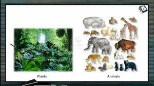 Classification of Plants - Aims Of Classification (Session 1)