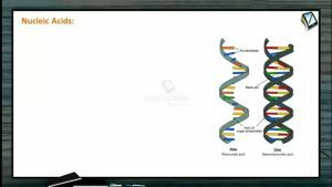 Digestion And Absorption - Nucleic Acid (Session 4)