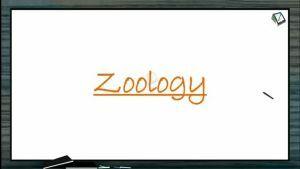 Embryonic Development - Fertilization (Session 2)