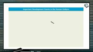Embryonic Development - Hormonal Control Of Pregnancy (Session 4)