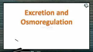 Excretion And Osmoregulation - Nitrogenous Wastes (Session 1)