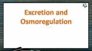 Excretion And Osmoregulation - Physiology Of Excretion (Session 2)