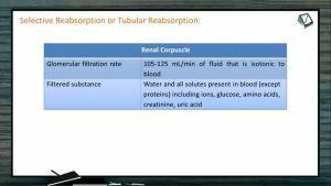 Excretion And Osmoregulation - Tubular Reabsorption II (Session 2)