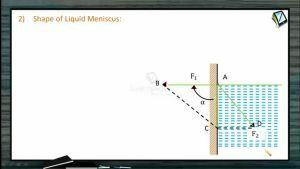 Fluids - Shape Of Liquid Meniscus (Session 7 & 8)