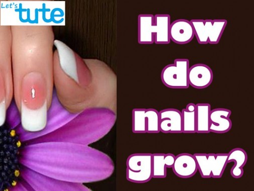 Class 9 Science - How Do Nails Grow Video by Let's tute