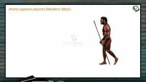 Human Evolution - Homo Sapiens Sapiens (Session 1)