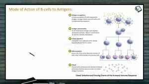 Human Health And Diseases - Mode Of Action Of B-Cells To Antigens (Session 2)