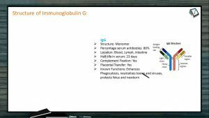 Human Health And Diseases - Structure Of Immunoglobulin Part I (Session 2)