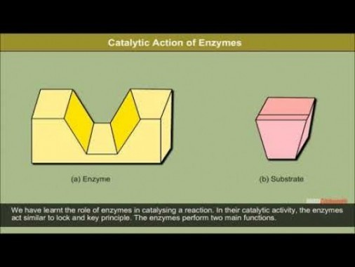 Class 12 Chemistry - Interaction Of Drugs With Targets Video by MBD Publishers