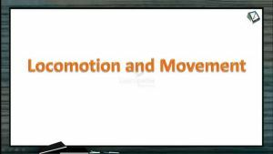 Locomotion And Movement - Types Of Muscles (Session 2)
