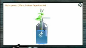 Mineral Nutrition - Hydroponics (Session 1)