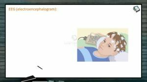 Neural Control And Coordination - EEG (Electroencephalography) (Session 7)