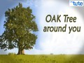 All Class Values To Lead - Oak Tree Around You Video by Lets Tute