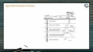 Origin And Evolution Of Life - Age Determination Of Fossil And Carbon Dating (Session 9)