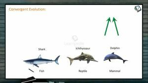 Origin And Evolution Of Life - Convergent Evolution (Session 4)
