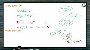 Origin And Evolution Of Life - Macro Evolution (Session 5)